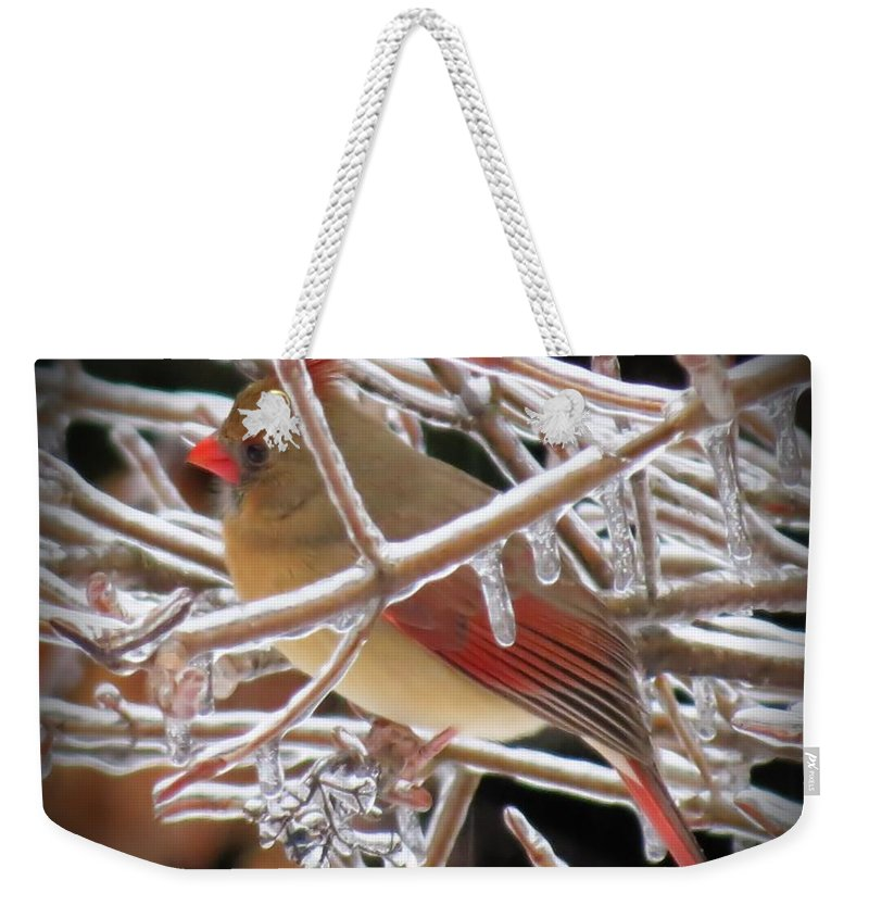 Weekender Tote Bag featuring the photograph Ice Cage - Female Cardinal by MTBobbins Photography