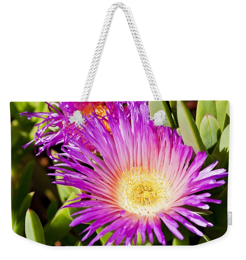 Ice Plant Weekender Tote Bag featuring the photograph Ice Plant Blossom by Kelley King