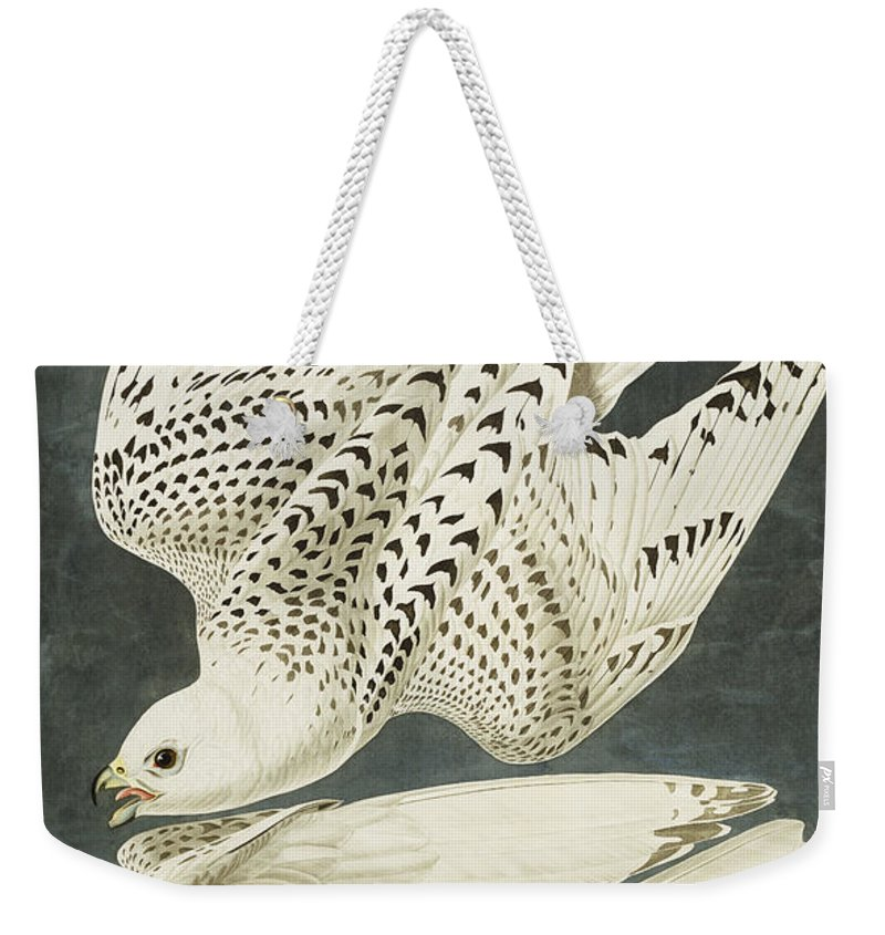 Iceland Or Jer Falcon. Gyrfalcon (falco Rustiocolis) From 'the Birds Of America' (aquatint & Engraving With Hand-colouring) By John James Audubon (1785-1851) Weekender Tote Bag featuring the drawing Iceland Or Jer Falcon by John James Audubon