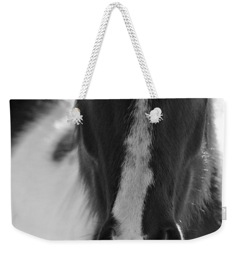 Horse Weekender Tote Bag featuring the photograph iContact by Evelina Kremsdorf