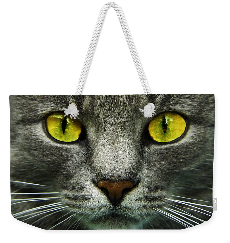 Cats Weekender Tote Bag featuring the photograph I.c.u. by Joachim G Pinkawa