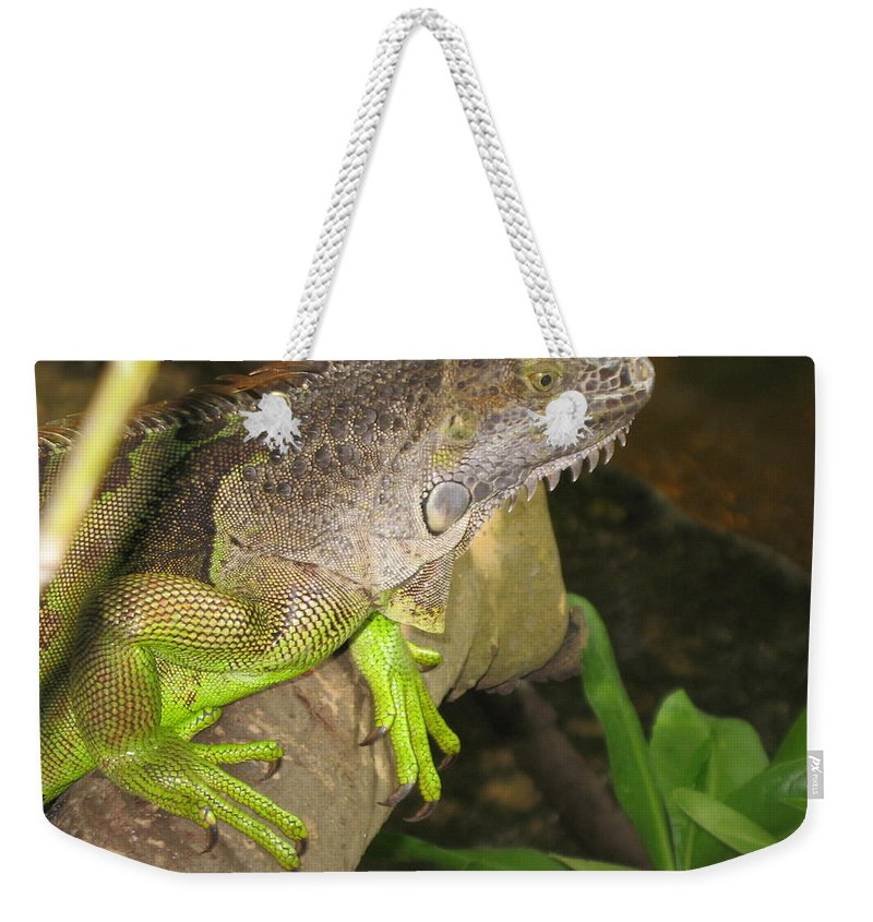 Iguana Weekender Tote Bag featuring the photograph Iguana - A Special Garden Guest by Christiane Schulze Art And Photography