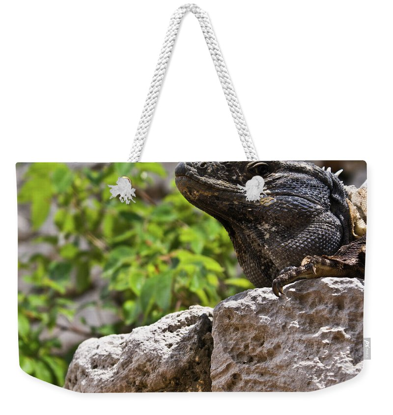 Iguana Weekender Tote Bag featuring the photograph Iguana At Talum Ruins Mexico 2 by Douglas Barnett