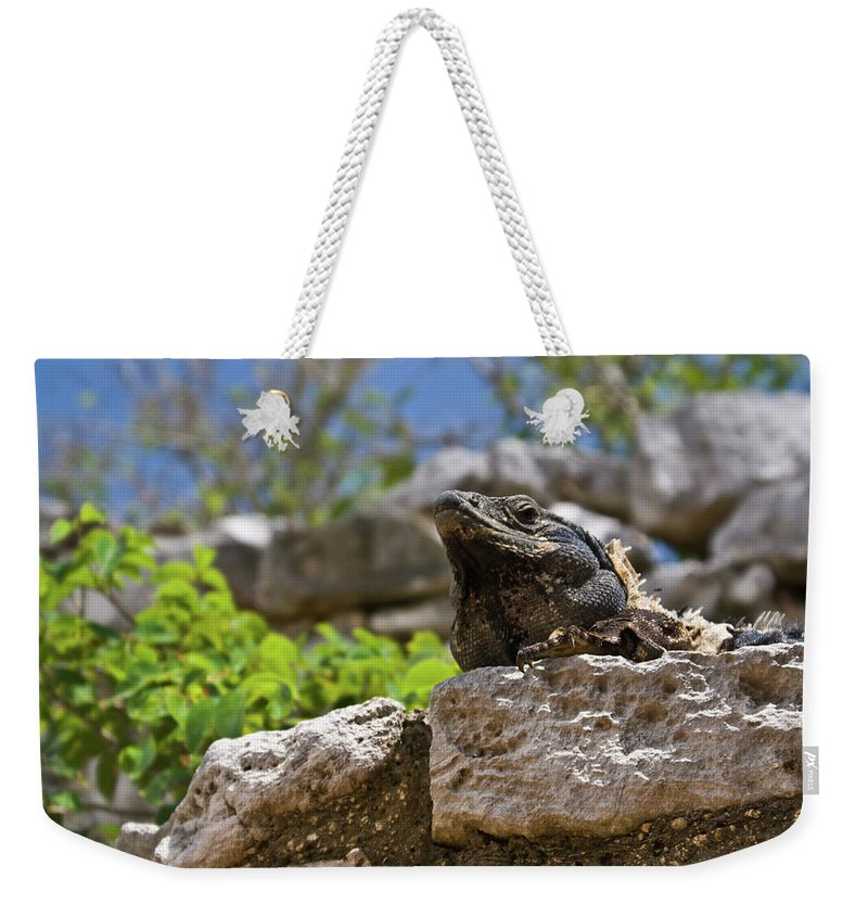 Reptile Weekender Tote Bag featuring the photograph Iguana At Talum Ruins Mexico by Douglas Barnett