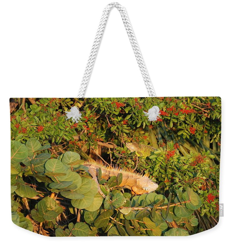Sunset Weekender Tote Bag featuring the photograph Iguanas by Rob Hans