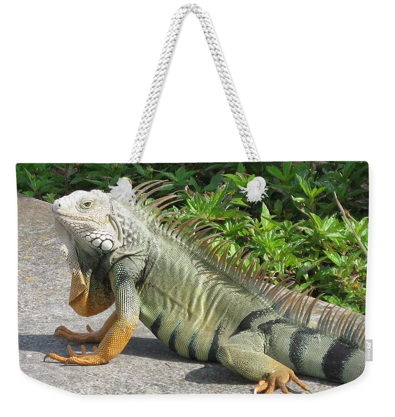 Iguania Weekender Tote Bag featuring the photograph Iguania Sunbathing by Christiane Schulze Art And Photography