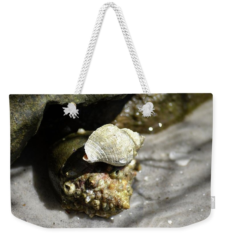 Crabs Weekender Tote Bag featuring the photograph I'll Carry You by Tamra Lockard