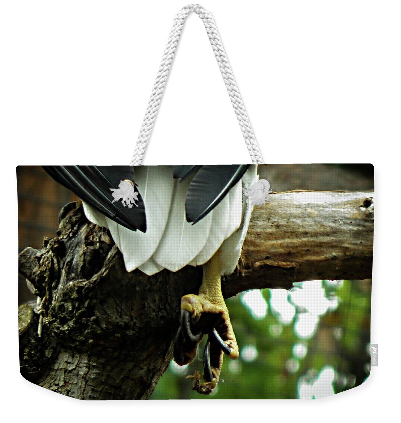 Eagle Weekender Tote Bag featuring the photograph Ill Get You My Pretty by Kristie Ferrick