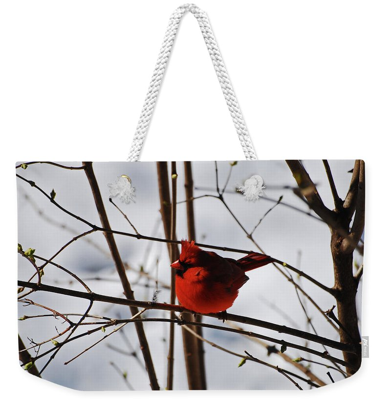 Cardinal Weekender Tote Bag featuring the photograph I'm Feeling Rather Red Today by Lori Tambakis