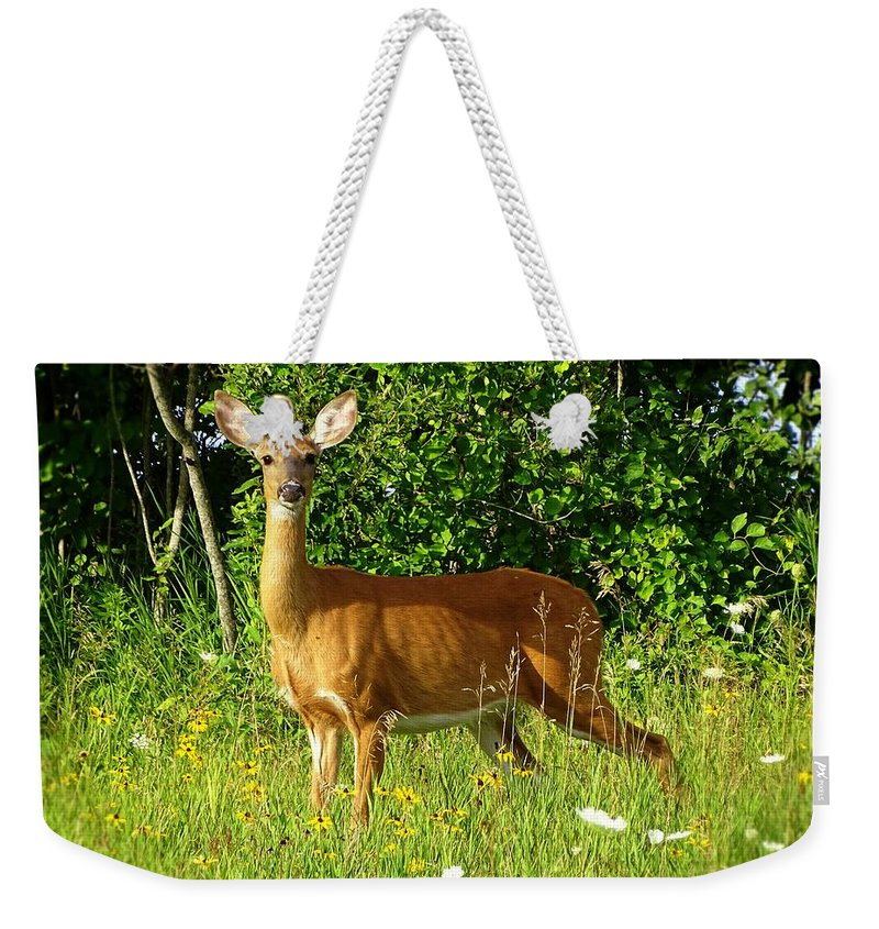 Deer Weekender Tote Bag featuring the photograph I'm Not Fake by Lilia D