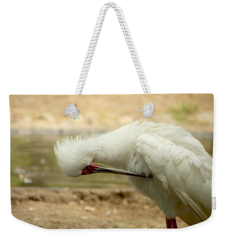 Bird Weekender Tote Bag featuring the photograph I'm So Ashamed by Donna Blackhall