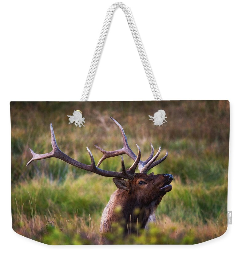 Elk Weekender Tote Bag featuring the photograph I'm Talking To You. by Darren White