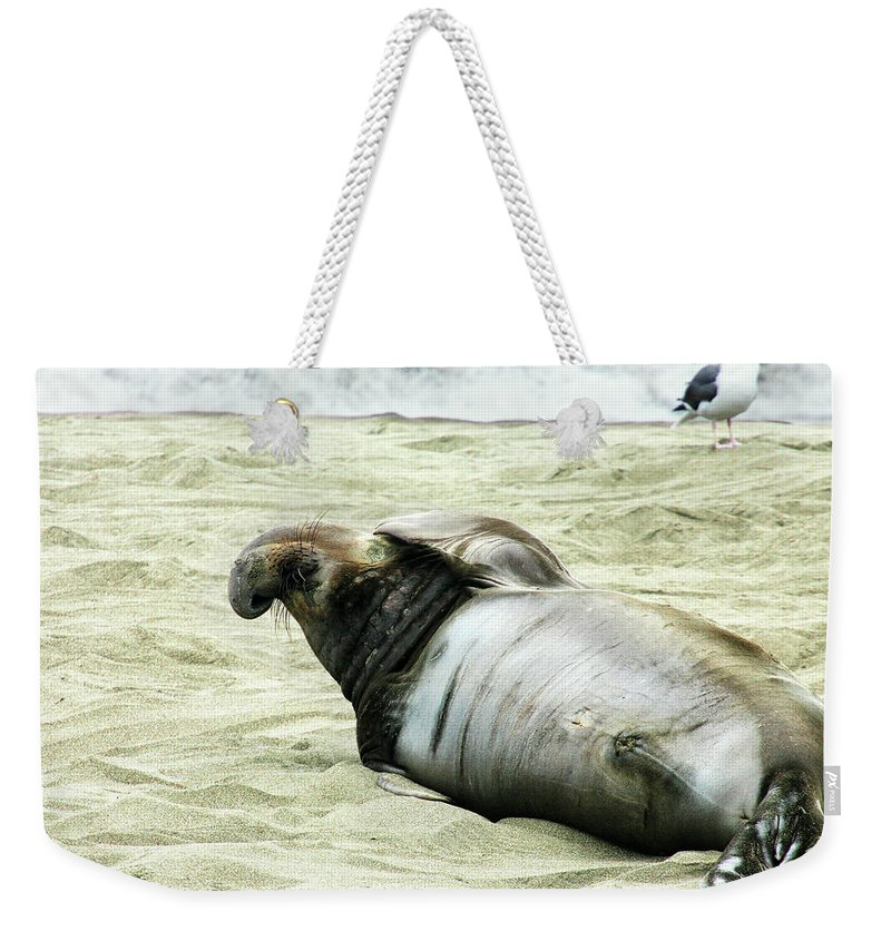 Elephant Seal Weekender Tote Bag featuring the photograph Im Too Sexy by Anthony Jones