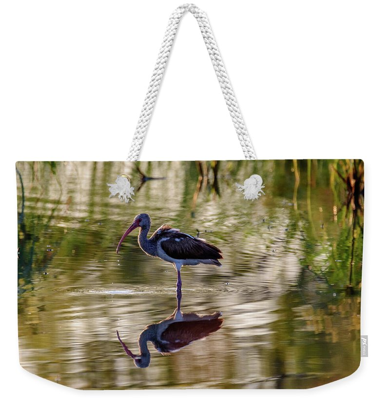 Birds Of South Texas Weekender Tote Bag featuring the photograph Immature White Ibis At Sunrise by Debra Martz