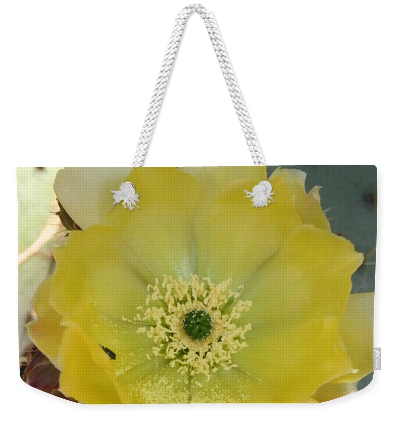 Cactus Weekender Tote Bag featuring the photograph Impressive Beauty by Christiane Schulze Art And Photography