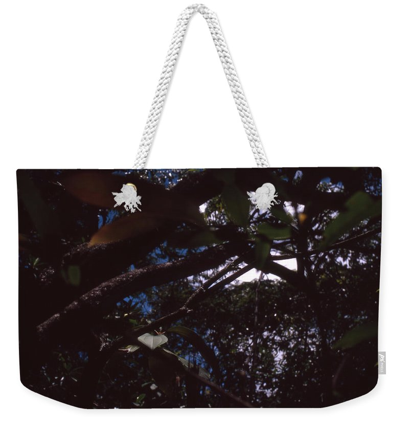 Bahia Weekender Tote Bag featuring the photograph In A Brazilian Forest by Patrick Klauss