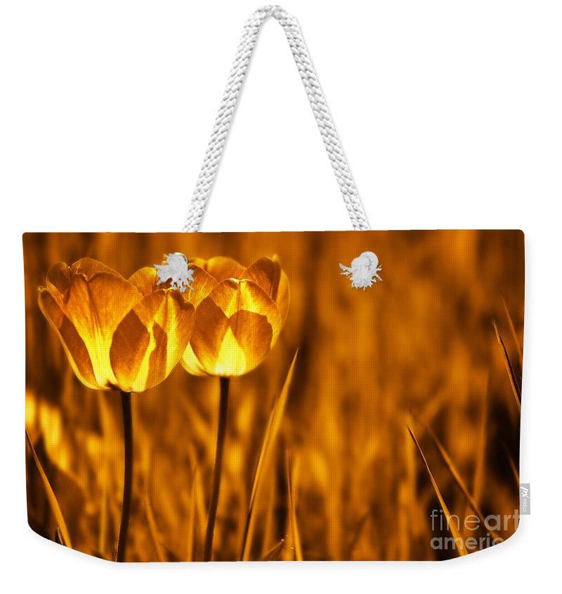 Tulips Weekender Tote Bag featuring the photograph In A Perfect World by Jacky Gerritsen