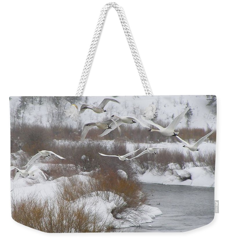 Bird Weekender Tote Bag featuring the photograph In Flight by DeeLon Merritt