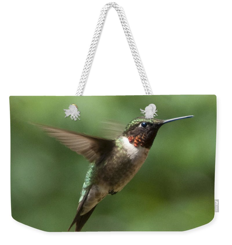 Bird Weekender Tote Bag featuring the photograph In Flight by Steven Natanson