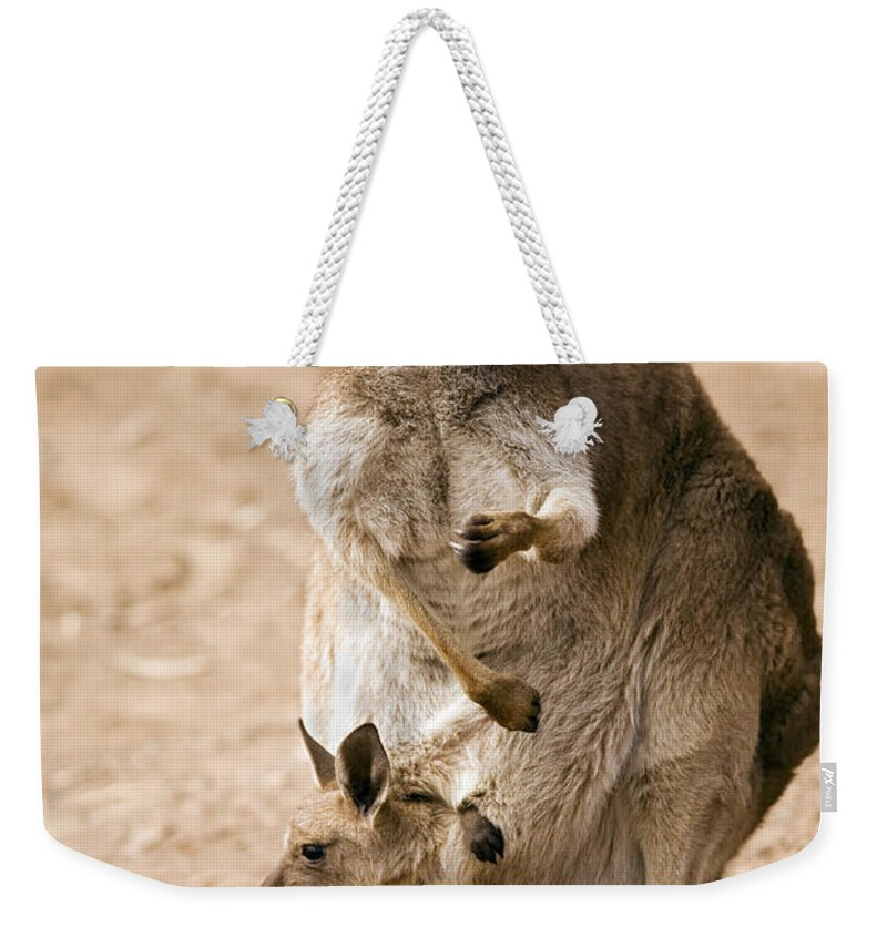 Kangaroo Weekender Tote Bag featuring the photograph In Mother's Care by Mike Dawson