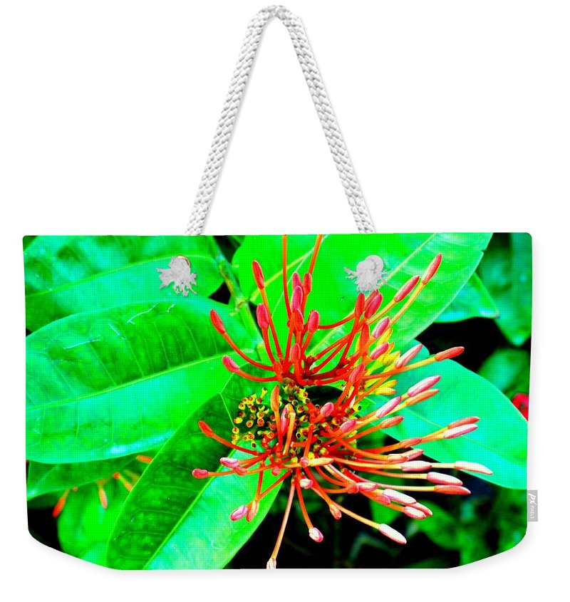 Flower Weekender Tote Bag featuring the photograph In My Garden by Ian MacDonald