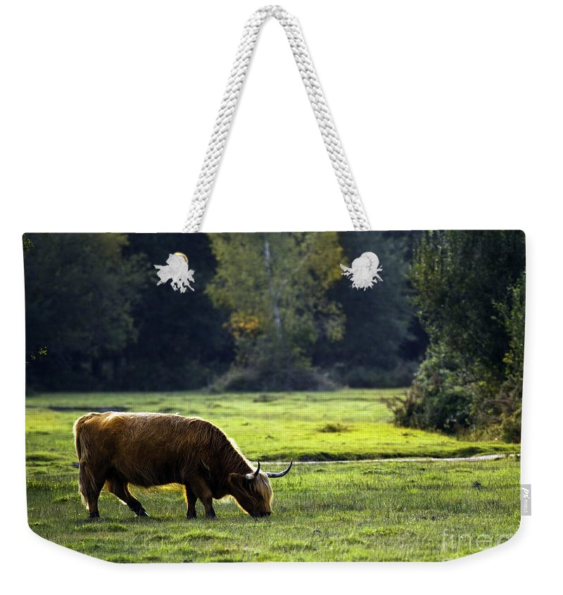Heilan Coo Weekender Tote Bag featuring the photograph in New Forest by Angel Tarantella