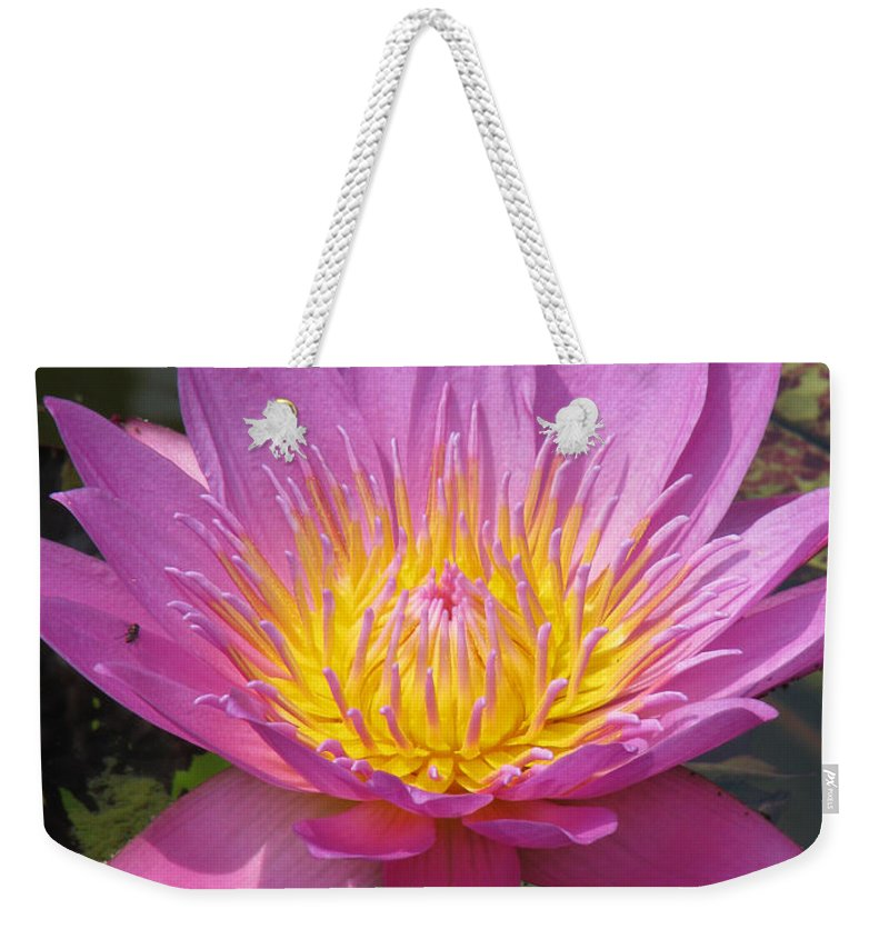 Lotus Weekender Tote Bag featuring the photograph In Position by Amanda Barcon