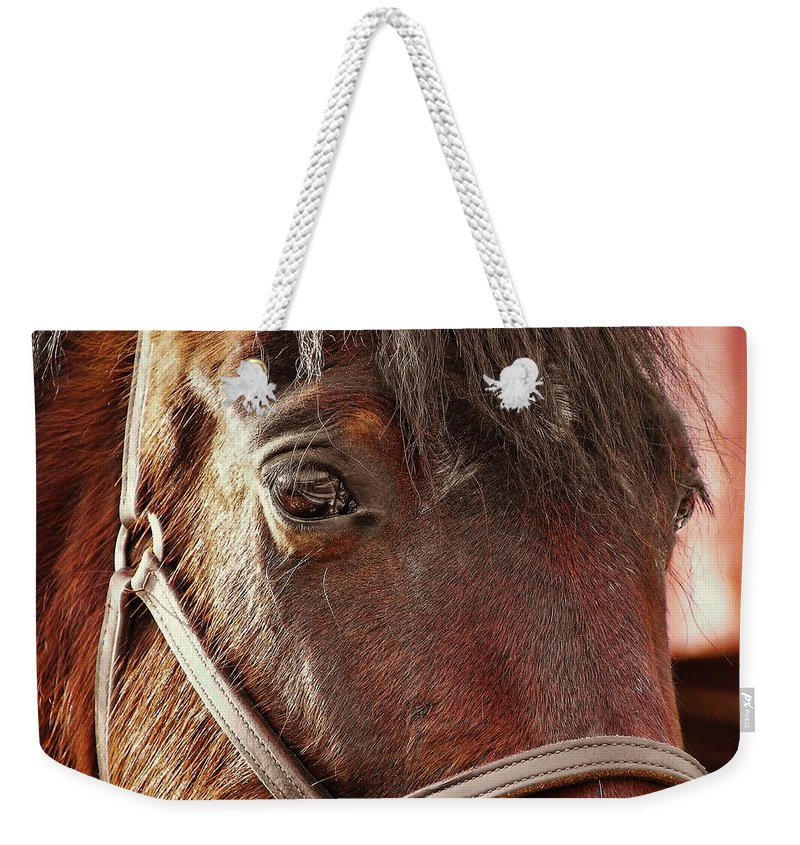 Horse Weekender Tote Bag featuring the photograph In Russian Kon by JAMART Photography
