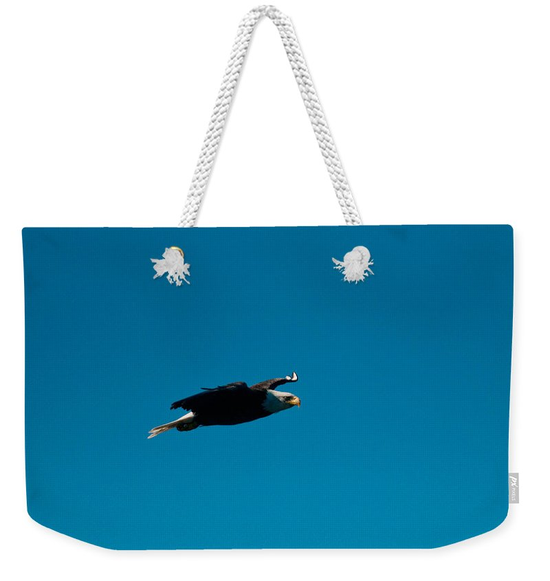 Eagle Weekender Tote Bag featuring the photograph In Search Of by Paul Mangold