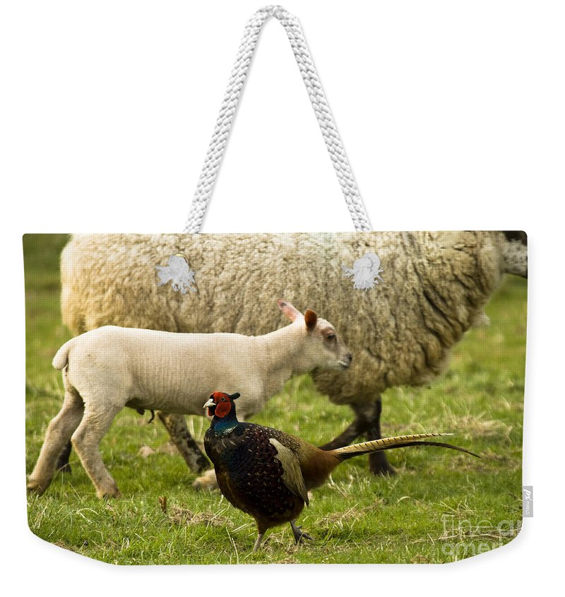 Pheasant Weekender Tote Bag featuring the photograph In The Countryside by Angel Ciesniarska