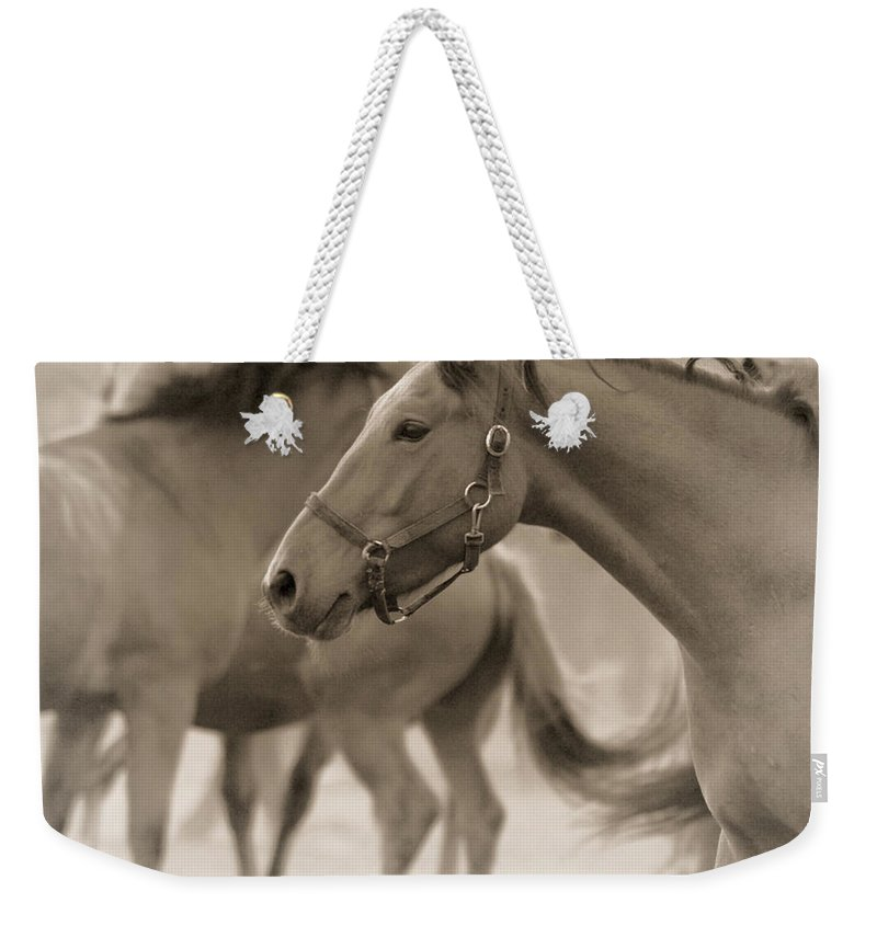 Horses Weekender Tote Bag featuring the photograph In The Dust by Angel Ciesniarska