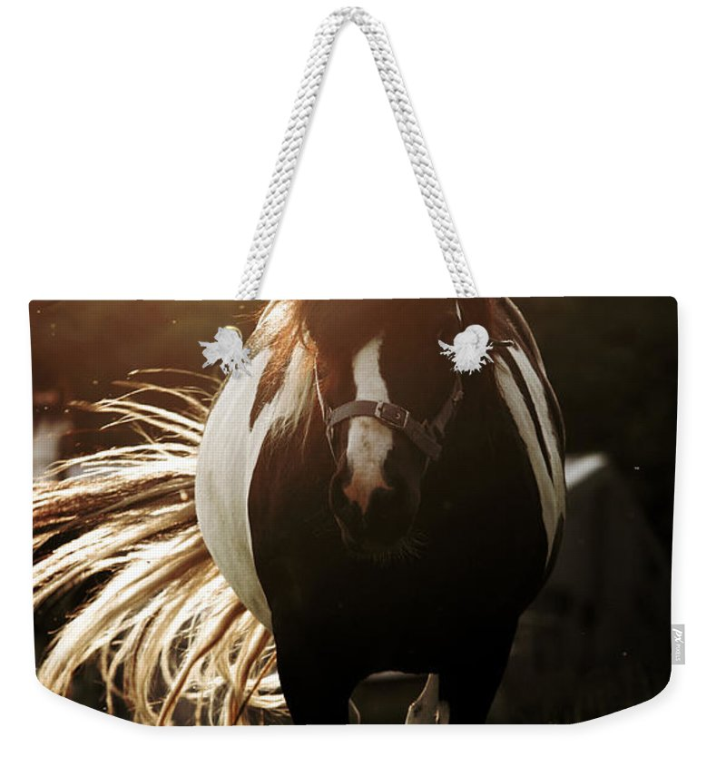 Horse Weekender Tote Bag featuring the photograph In The Last Rays Of Setting Sun by Angel Tarantella