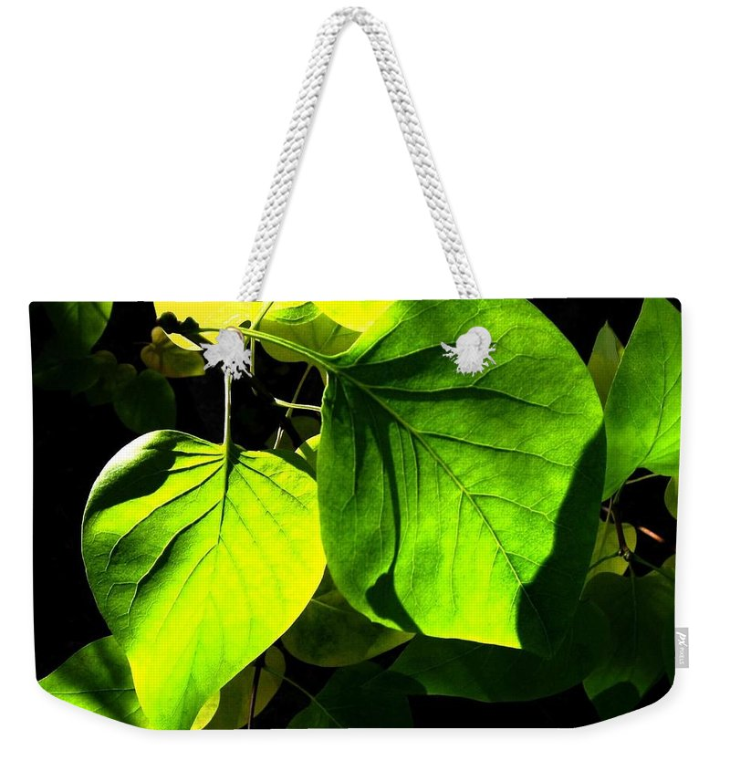 Lilac Leaves Weekender Tote Bag featuring the photograph In The Limelight by Will Borden