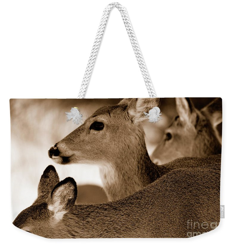 Deer Weekender Tote Bag featuring the photograph In The Middle by Lori Tambakis
