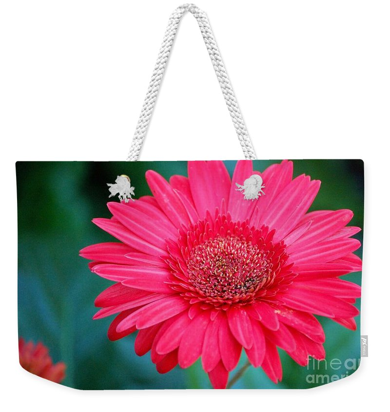 Gerber Daisy Weekender Tote Bag featuring the photograph In the Pink by Debbi Granruth