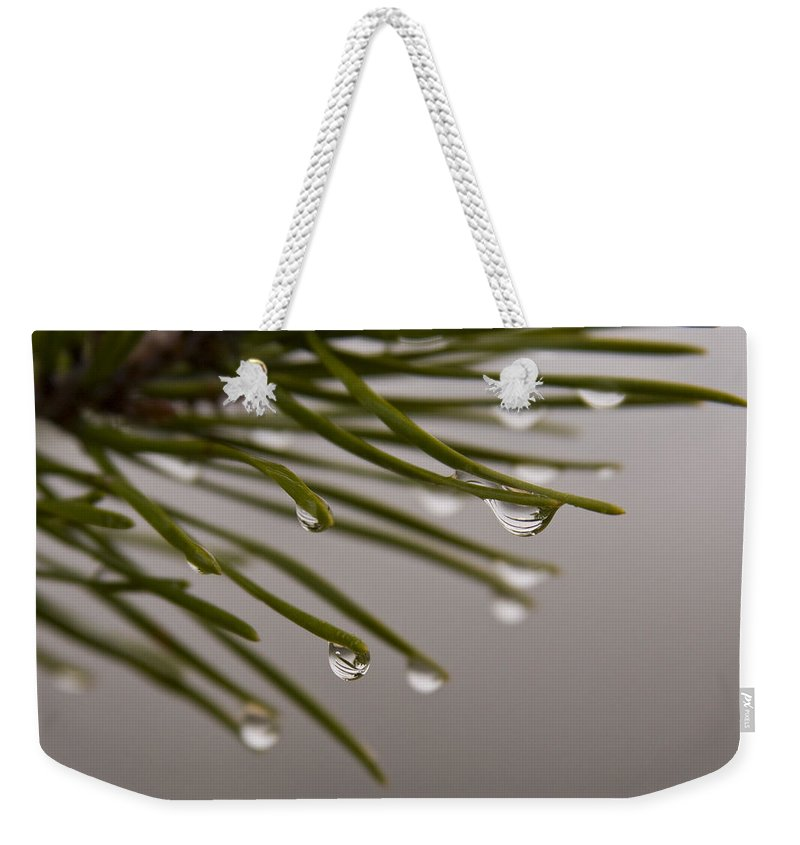 Pine Tree Needle Drop Droplet Reflection Rain Green Fog Foggy Nature Outdoors Hike Weekender Tote Bag featuring the photograph In The Rain by Andrei Shliakhau