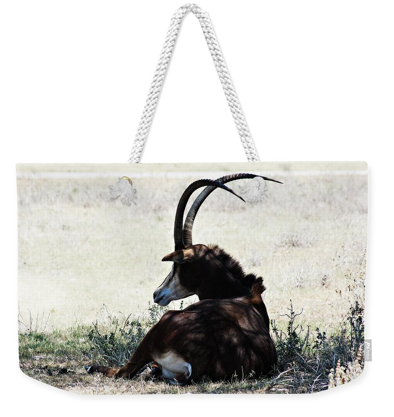 Sable Weekender Tote Bag featuring the photograph In The Shade by Douglas Barnard