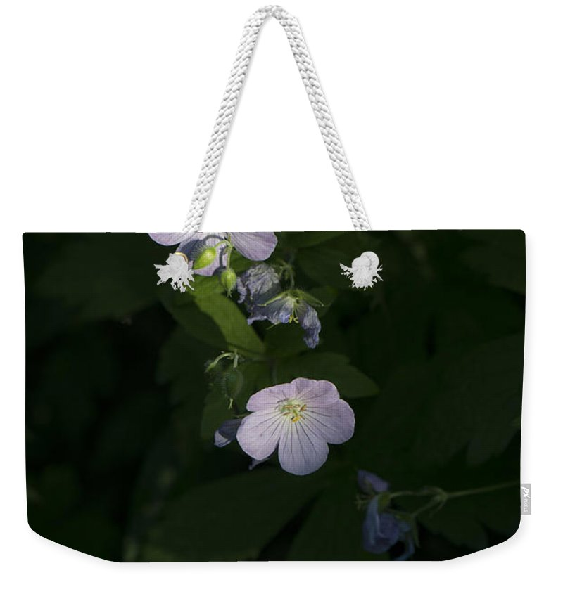 Flower Weekender Tote Bag featuring the photograph In The Spotlight by Jayne Gohr