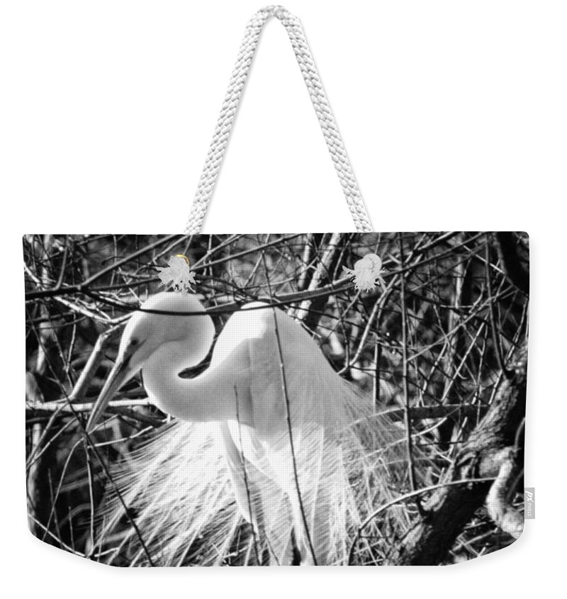 Birds Weekender Tote Bag featuring the photograph In The Trees by Phill Doherty