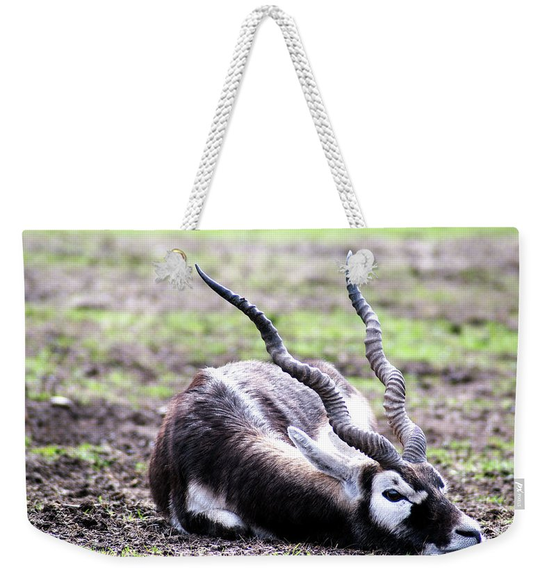 Indian Antelope Weekender Tote Bag featuring the mixed media Indian Antelope by Amitabh Dayal