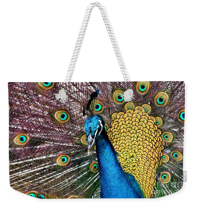 Aloha Weekender Tote Bag featuring the photograph Indian Blue Peacock by Sharon Mau