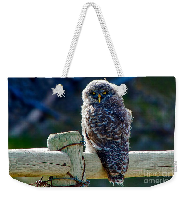 Great Grey Owl Weekender Tote Bag featuring the photograph Intense Stare by James Anderson