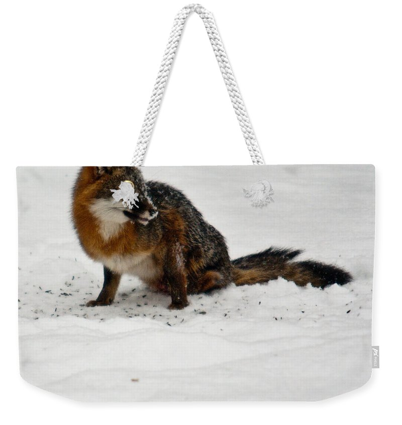 Fox Weekender Tote Bag featuring the photograph Intent Red Fox by Douglas Barnett