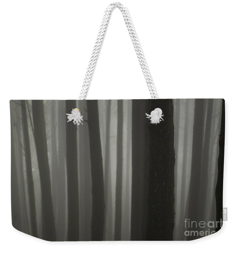 Forest Weekender Tote Bag featuring the photograph Into Forest by MingTa Li