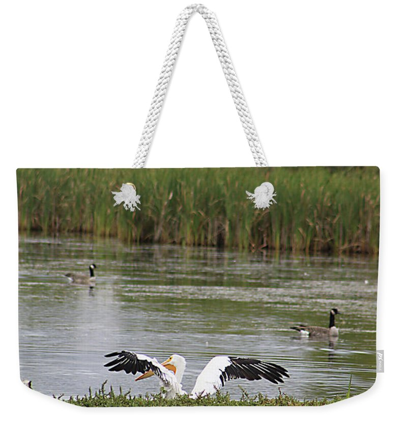 Animal Weekender Tote Bag featuring the photograph Into The Water by Alyce Taylor