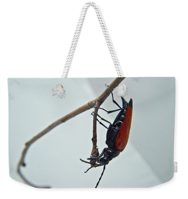 Investigating Weekender Tote Bag featuring the photograph Investigating A Bud by Douglas Barnett
