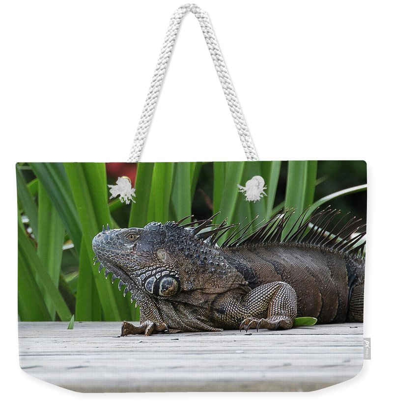 Ronnie Maum Weekender Tote Bag featuring the photograph Iquana by Ronnie Maum