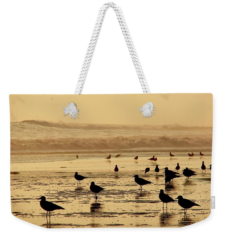 Iquique Weekender Tote Bag featuring the photograph Iquique Chile Seagulls by Brett Winn