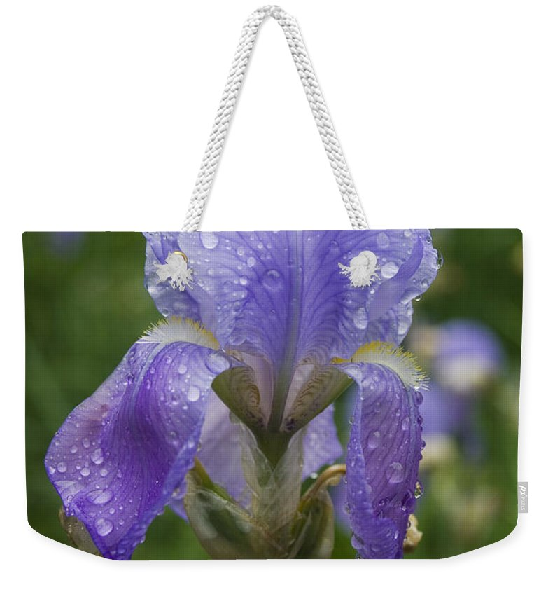 Iris Flower Blue Purple Green Rain Wet Drop Water Droplet Nature Garden Weekender Tote Bag featuring the photograph Iris After Rain by Andrei Shliakhau