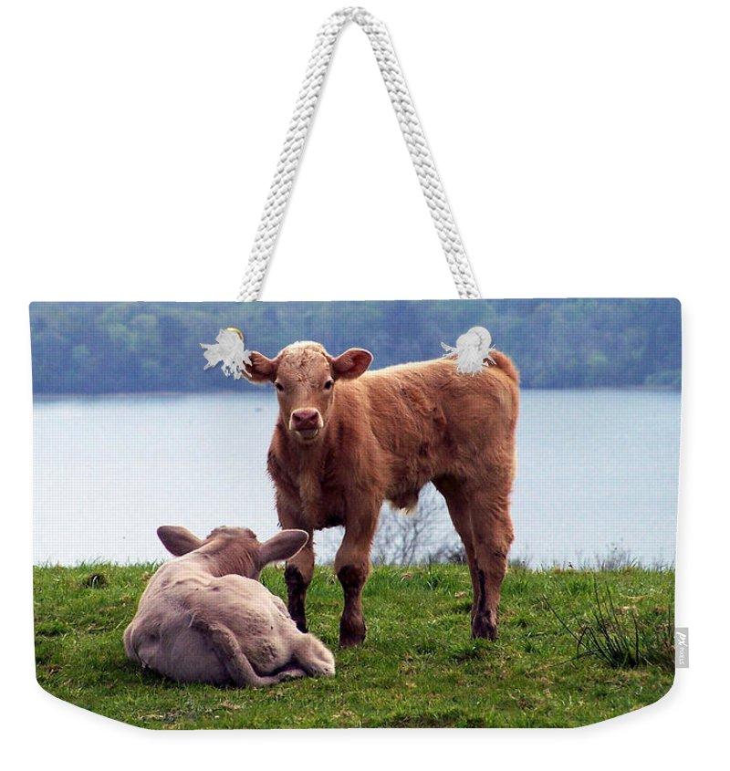 Ireland Weekender Tote Bag featuring the photograph Irish Calves At Lough Eske by Teresa Mucha